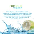 ogx Coconut Water Shampoing